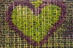 Heart flower wallpaper. An arrange flowerpot to heart shape wall Stock Photo