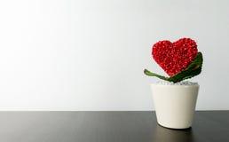 Heart flower in wihite pot. On desktop stock images