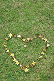 Heart flower on yard Royalty Free Stock Photo