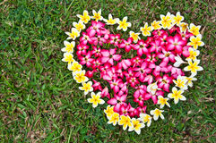 Heart flower on yard Royalty Free Stock Images