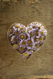Heart from flowers. Stock Photos