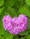 Heart flowers Royalty Free Stock Photography