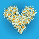 Heart flowers camomile Stock Photo