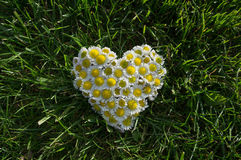 Heart from flowers on the grass Stock Photo