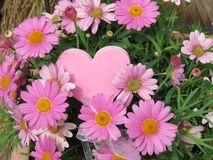 Heart and flowers. A pink heart with pink flowers Royalty Free Stock Photography