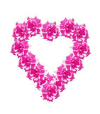 Heart of flowers rose isolated on white background. Stock Photography