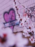 Heart and flowers in the spring time royalty free stock photo