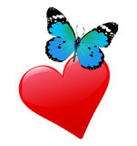 Heart and flying butterfly Stock Photography