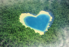 Heart in the forest Royalty Free Stock Photos