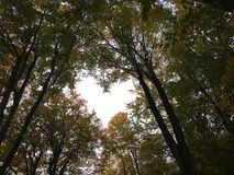 HEART IN FOREST CANOPY Royalty Free Stock Photo