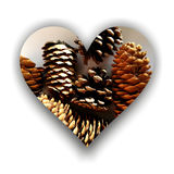 Heart form full of pine cones Stock Image