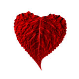 heart in the form of leaf Stock Image