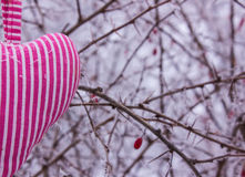 Heart in the form of pillows on a background of a bush with thorns in the frost. Stock Photography