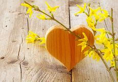 Heart with forsythia on rustic wood, love symbol for valentine's. Heart shape made of wood with forsythia on rustic wooden background, love symbol for valentine' royalty free stock images