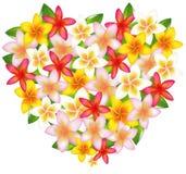 Heart From Fragipani. Vector Royalty Free Stock Photography