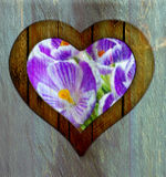Heart frame border window wooden flower. Wooden border of hearts shape on the wooden wall with view from flowers stock photography
