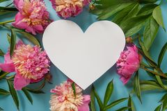 Heart frame. Pink peonies on blue background Stock Photography