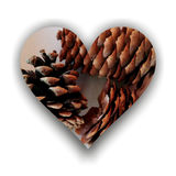 Heart full of brown pine cones Stock Images