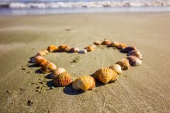 Heart full of shells on the sandy beach of Cyprus, coastline of the Mediterranean stock images