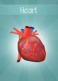 Heart. Funny illustration of human heart Stock Photo