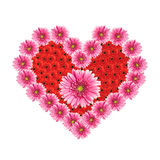 Heart from gerbera flowers. Isolated on white background Royalty Free Stock Image