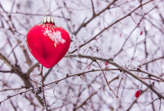 Heart of glass on a bush with thorns in hoarfrost Stock Photos