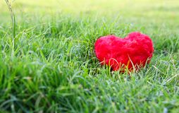 Heart on grass Stock Photos