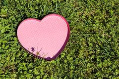 Heart in the grass Stock Image
