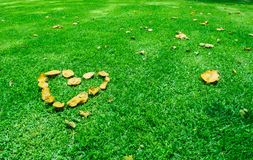 Heart in the Green Grass. Romantic concept. royalty free stock images