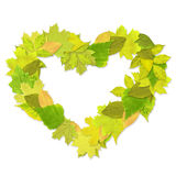 Heart from green leaves Royalty Free Stock Images