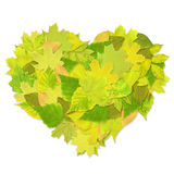 Heart from green leaves Stock Photography