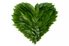 Heart of green leaves. The concept of love and protection of nature Royalty Free Stock Images