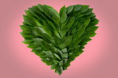 Heart of green leaves. The concept of love to nature and protection of the environment Stock Photos