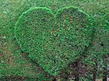 Heart green. royalty free stock images