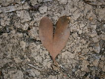 Heart Gum Tree Leaf Background. Background Texture of Brown Heart Gum Tree Leaf on Dried Up Clay Lakebed Stock Photography