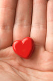 Heart in hand. Stock Photography