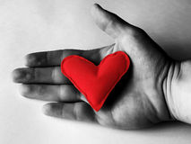 Heart in a hand. Red heart in a black-and-white hand Royalty Free Stock Photo
