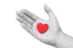 Heart in the hand Stock Image