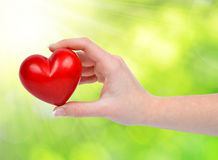 Heart in hand. On green natural background Stock Photography