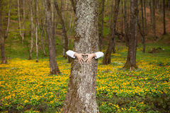 Heart hand on tree in forest. With yellow flowers in background stock photos