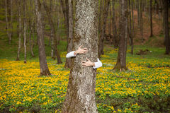 Heart hand on tree in forest. With yellow flowers in background royalty free stock image