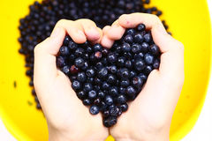 Heart handful of bilberry close up photo Royalty Free Stock Image