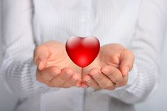 Heart in hands. Red heart in female hands royalty free stock image