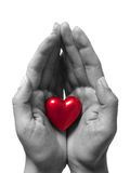 Heart in hands. Isolated on white stock image
