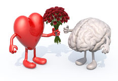 Heart hands her a bouquet of roses to a brain Stock Photos