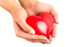 Heart in hands over white. Heart in hands as love and health symbol over white Stock Images