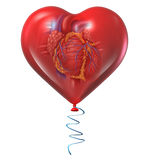 Heart Health. Concept and medical symbol with a human anatomical organ inside a red balloon as an icon for circulatory risks and cardio care isolated on a white Stock Photo