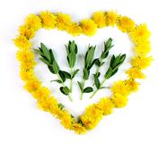 Heart with herbs for homeopathy and cooking. Heart made of herbs for homeopathy and cooking - dandelions with mint stock images