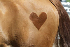 Heart on Hip Stock Image