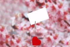 Heart holder with white paper over pink. Heart shape holder of paper with blank visit card over pink spring floral background Stock Image
